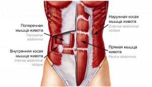 Press-anatomy