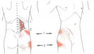 muscle-quadro1
