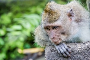 IMG_1908_monkey